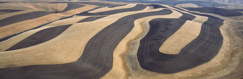 Wheat Fields and Contour Farming, S.E. Washington Royalty Free Stock Image
