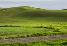 Wheat fields contour the Palouse hills Royalty Free Stock Photos