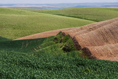Wheat fields contour the Palouse hills Stock Image