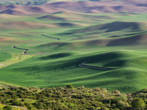 Wheat fields contour the Palouse hills Stock Photography