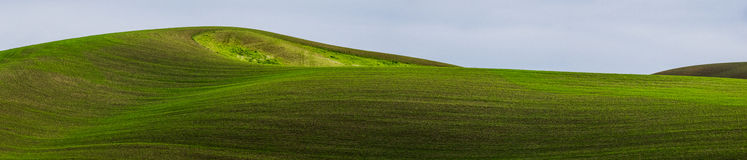 Wheat fields covering hills Royalty Free Stock Photography