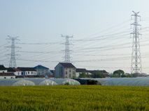 Wheat fields in front of plastic covered greenhouses Royalty Free Stock Images