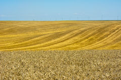 Wheat fields Royalty Free Stock Photography