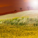 Wheat fields after harvesting stock images