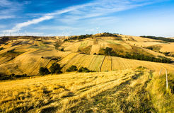 Wheat fields. Landscape and blue sky Royalty Free Stock Photography
