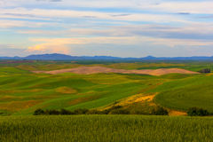 Wheat Fields and Mountains in the Background Royalty Free Stock Image