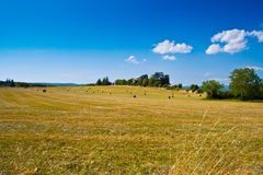 Wheat fields moved by wind. A wheat fields moved by wind Stock Photos