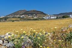 Wheat fields near town of Parikia, Paros island, Greece Stock Photos