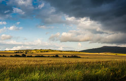 Wheat fields. One summer day on the yellow wheat fields royalty free stock images