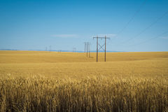 Wheat fields, power lines, eastern Washington Royalty Free Stock Photography