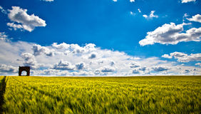 Wheat Fields with ruin Stock Photo