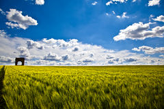 Wheat Fields with ruin Royalty Free Stock Image