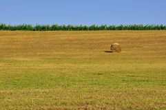 Wheat fields of rural Tuscany, Italy Stock Photos