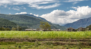 Wheat fields. Situated in the spanish province of huesca, you can see houses of the village with some trees. in the background are pyrenees mountains Royalty Free Stock Photography