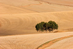 Wheat fields, South Africa stock photography