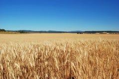 Wheat fields, Spokane County, Washington. Wheat fields on the Peone Prairie in Spokane County, near Mead, Washington Stock Photo