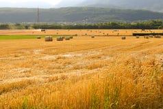 Wheat fields in Switzerland. Beautiful summer wheat fields autumn Royalty Free Stock Photo