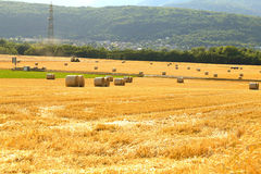 Wheat fields in Switzerland. Beautiful summer wheat fields with green forest Stock Photography