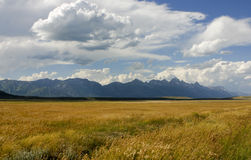 Wheat fields with Teton Range in the background Stock Photography