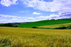 Wheat fields in Tuscany, Italy  Royalty Free Stock Images