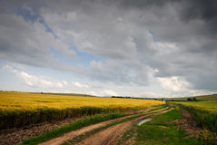 Wheat fields. Two wheat fields with the roads between them Royalty Free Stock Images