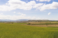 Wheat fields under blue sky Stock Image