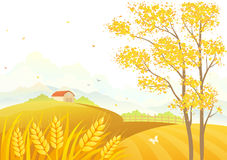 Wheat fields. Vector illustration of an autumn tree and wheat fields Royalty Free Stock Images