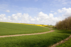 Wheat fields and woodland Royalty Free Stock Image