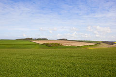 Wheat fields and woodland Royalty Free Stock Photo