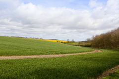 Wheat fields and woodlands Royalty Free Stock Photo