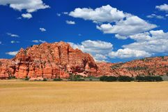 Wheat fields at Zion NP Stock Images