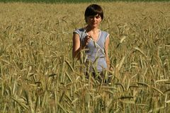 Wheat filed Royalty Free Stock Photography