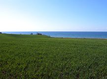 Wheat Filed Ocean Background Stock Photo
