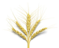 Wheat Royalty Free Stock Image
