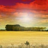 Wheat flied at sunset Stock Photos