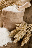 Wheat and flour. Wheat ears and flour in burlap sack Stock Images