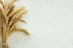 Wheat flour and wheat spike. Scattered wheat flour on table as background and wheat spike Stock Image