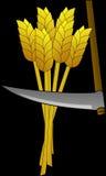 Wheat, Food, Farm, Harvest, Tool Royalty Free Stock Photos