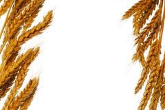 Wheat frame Royalty Free Stock Photo