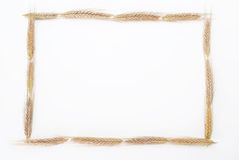 Wheat frame. Golden wheat picture frame object Royalty Free Stock Photography