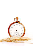 Wheat in front of vintage pocket clock. time concept Stock Photos