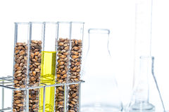 Wheat genetically modified, Plant Cell Stock Image