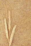 Wheat Germ. With wheat ears forming a textured background Royalty Free Stock Photos