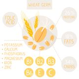 Wheat germ Royalty Free Stock Images