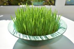 Wheat germ Stock Image