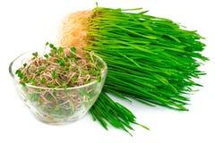 Free Wheat Germ With Radish Germ On Plate Stock Photo - 39264690