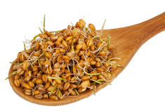 Wheat germ in a wooden spoon Royalty Free Stock Photography