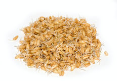 Wheat Germs Royalty Free Stock Images