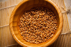 Wheat germs in a bowl. Wheat harvest, photo with copy space Royalty Free Stock Photography