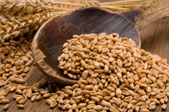Wheat grain Stock Images